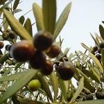 Un sabato fuori porta tra olive e castagne
